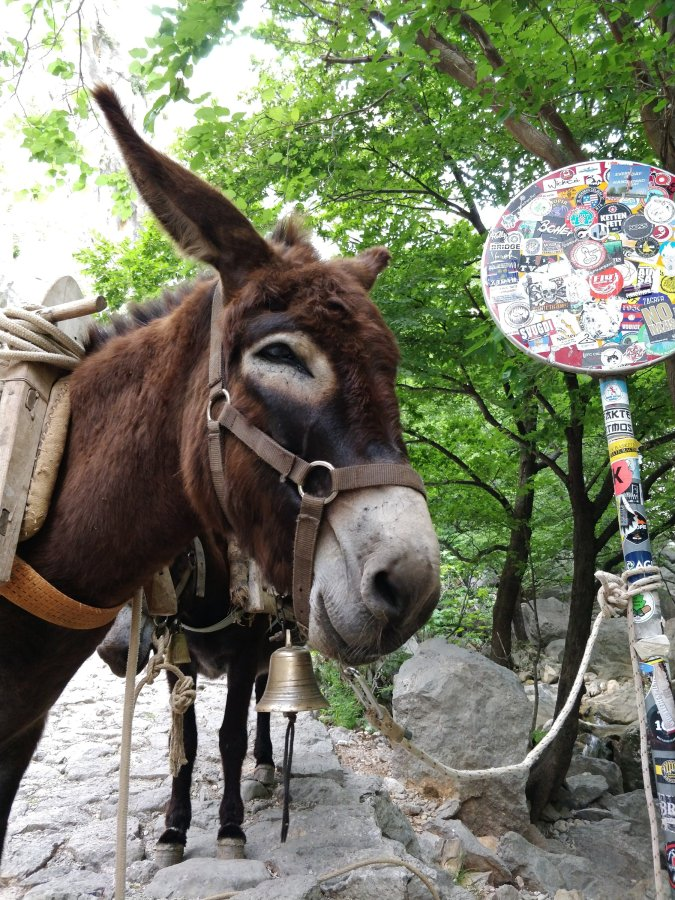 Balkan / Italien: Tag 6 – Zengg –Novigrad